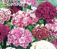 Цветы маттиола ночная фиалка 2